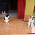 La Signora dei Cento Gatti